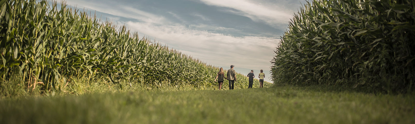 Family and corn field